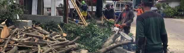 Banjir dan Pohon Tumbang