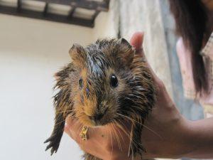 binatang apa ini